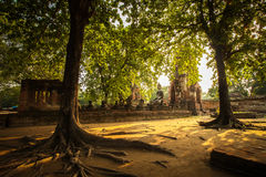 Buddha Statue with Tree frame. (Ayuthaya, Thailand Stock Photography