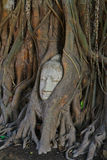 Buddha-Statue umgeben durch Baumwurzel Lizenzfreie Stockfotos