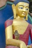 Buddha-Statue und wilder Affe in Kathmandu, Nepal Lizenzfreie Stockbilder
