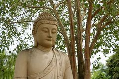 Buddha statue under bodhi tree. Ath the Fo Guang Shan Dong Zen temple in Jenjarom, Selangor, Malaysia Stock Photos
