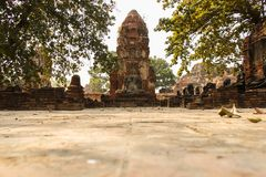 Buddha statue in Wat Mahathat ruined temple, Ayutthaya, Thailand. royalty free stock images