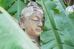 Buddha statue in wood. With soft deft of field royalty free stock photo