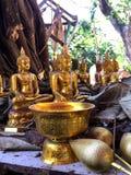 Buddha-Statuen unter dem Baum im Dschungel lizenzfreies stockbild