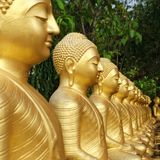 Buddha statues are covered in gold, arranged in a row, garden with green trees. Concept of rebirth, reincarnation, eternal life. Sri Lanka. Empty place for stock image