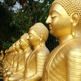 Buddha statues are covered in gold, arranged in a row, garden with green trees. Concept of rebirth, reincarnation, eternal life. Sri Lanka. Empty place for royalty free stock image