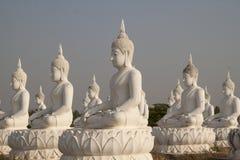 Buddha statues field Stock Image