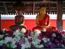 Buddha statues. Sacred Buddha statues at a temple in Sri Lanka Stock Images