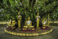 Buddha statues for seven days Royalty Free Stock Photos