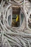 Buddha statuy kościelny stary ściana z cegieł i drzewo korzeń w Wacie Łomotamy Kung Samut Sakhon Tajlandia Obraz Royalty Free