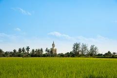 Buddha staty bak ricefälten Arkivbild
