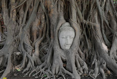 Buddha staty i tree Arkivfoto