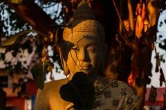 Buddha staty under treen fotografering för bildbyråer