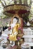 Buddha staty under treen Royaltyfria Bilder