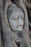 Buddha Staue Imagem de Stock Royalty Free