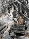 Buddha sull'albero Fotografie Stock Libere da Diritti