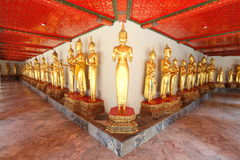 buddha thaila för tempel för många phostandstatyer royaltyfria foton