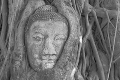 Buddha in the tree Royalty Free Stock Image