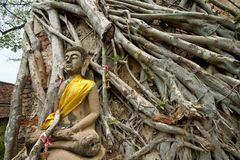 Buddha and Tree Stock Image
