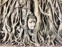 buddha tree Arkivbild