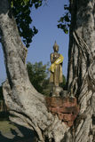 Buddha in the tree. A statue of Buddha in the old tree Stock Photography