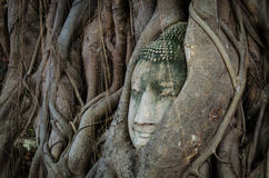 Buddha in a Tree. Ancient Buddha's face in a tree Royalty Free Stock Photography