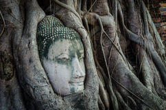Buddha in a Tree. Ancient Buddha's face in a tree Royalty Free Stock Photos
