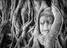 Buddha in the tree Stock Photo