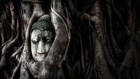 Buddha in the tree Royalty Free Stock Photo
