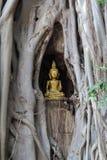 Buddha in tree Stock Photos