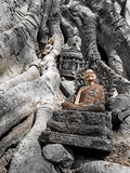 Buddha on the tree. At SUKOTHAI Royalty Free Stock Photos