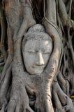 buddha twarzy wizerunku ruina Fotografia Stock