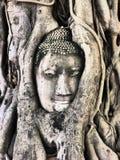 Buddha in un albero Immagini Stock