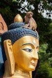 Buddha und Affe Lizenzfreie Stockfotografie