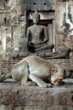 Buddha und Affe Lizenzfreies Stockfoto