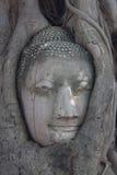 Buddha und Baum Stockfoto