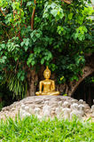 Buddha under the Bo tree Royalty Free Stock Images