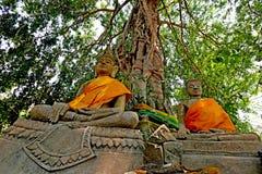 Buddha under trädet Royaltyfri Foto
