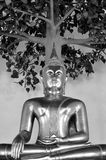 Buddha under the tree in black and white. Bangkok, Thailand royalty free stock photos