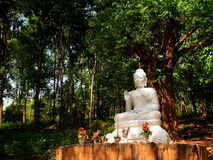 Buddha in the valley. Stock Photo