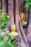 Buddha w Bodhi drzewa głowie Zdjęcia Royalty Free