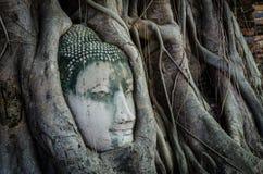 Buddha w drzewie Zdjęcia Royalty Free