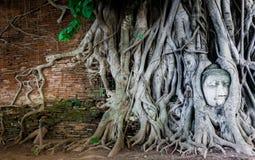 Buddha w Drzewnych korzeniach Obrazy Royalty Free