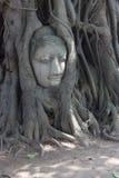 Buddha y árbol Imagenes de archivo