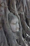 Buddha y árbol Imagen de archivo libre de regalías