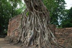 Buddhahead i tempelkomplexet Wat Maha That Royaltyfria Bilder