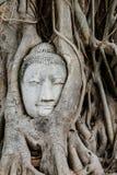 Buddhahuvud i en trädstam Arkivfoto