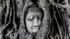 Buddhahuvud Wat Pramahatha Arkivbild