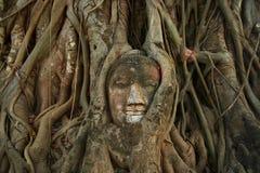 Buddhahuvudet i träd rotar på Wat Mahathat, Ayutthaya arkivfoto