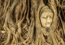 Buddhahuvudet i trädet rotar Arkivbilder