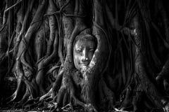 Buddhahuvudet som förbi täckas, rotar av ett träd i Watmahathat på Ayutthaya Thailand Royaltyfri Fotografi